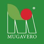 Mugavero
